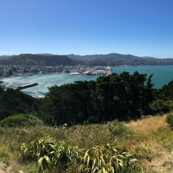 Mt Vic lookout
