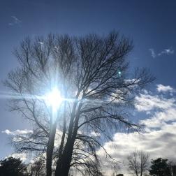 Sunny winter days
